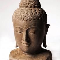 Buddha Büste 50 cm